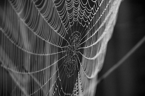 Photo of a spider's web